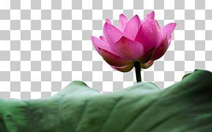 Flower Aquatic Plant Petal Stock.xchng Leaf PNG