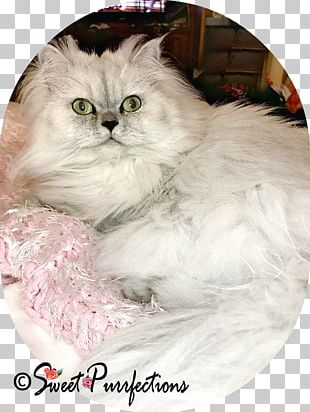 Persian Cat Asian Semi-longhair Ragdoll Burmilla Ragamuffin Cat PNG