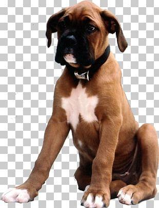 Boxer Dog Breed Valley Bulldog Puppy Companion Dog PNG