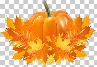 Pumpkin Pie Cucurbita Pepo Cucurbita Argyrosperma Crookneck Pumpkin PNG
