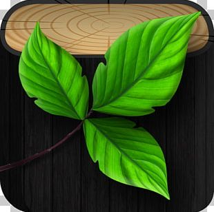 Banana Leaf Plant PNG
