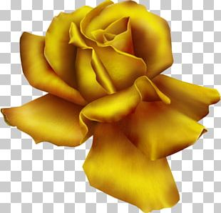 Rose Free Content PNG