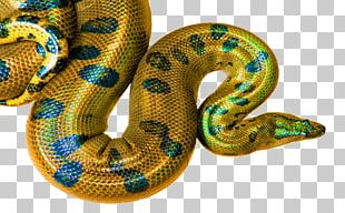 Boa Constrictor Desktop Display Resolution High-definition Television PNG