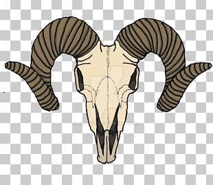 Goat Sheep Human Skull Symbolism PNG