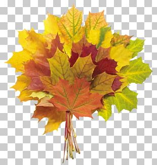 Autumn Leaf Color Flower Bouquet PNG