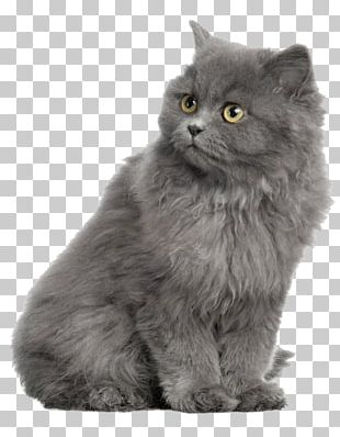 Persian Cat British Shorthair Kitten Dog Horse PNG