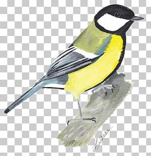 Finches Chickadee Fauna Beak Feather PNG