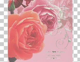 Garden Roses Cabbage Rose Floribunda Greeting & Note Cards Floral Design PNG