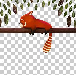 Red Panda Giant Panda Raccoon Drawing Illustration PNG