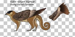 Owl Fauna Beak Feather Animal PNG