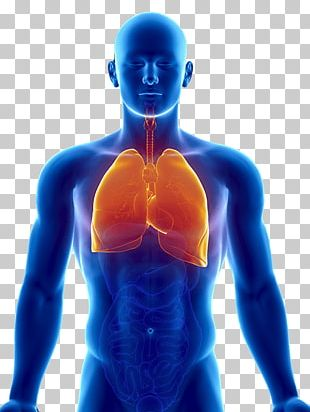 Lung Human Body Organ Respiratory System Heart PNG