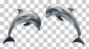 Dolphin Scalable Graphics PNG