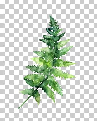 Watercolor Painting Fern Botanical Illustration PNG