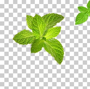 Tea Leaf Green Computer File PNG