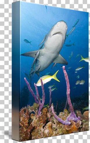 Marine Biology Ecosystem Coral Reef Aquarium Underwater PNG