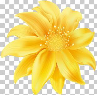 Flower Yellow Desktop PNG