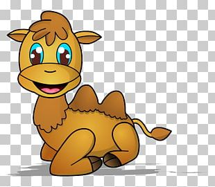 Camel Cartoon Illustration PNG