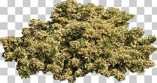 Tree Plant Shrub PNG