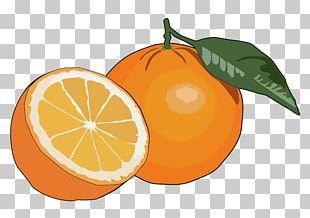 Orange Juice Fruit Mandarina Food PNG