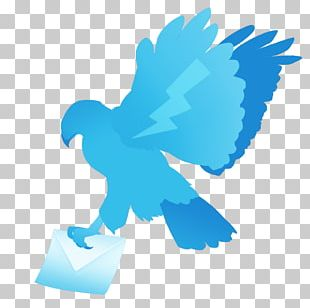 Bird Wing Beak Feather PNG