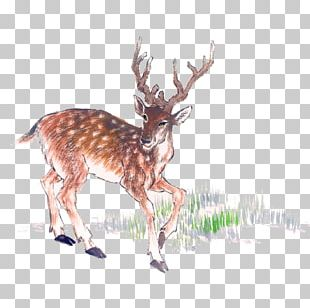 Deer Chinese Painting Ink Wash Painting PNG