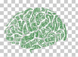 Cerebrum Agy Human Brain Thought Poster PNG