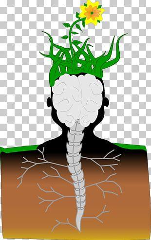 Plant Brain Hemp Pixabay Spinal Cord PNG