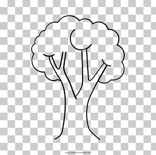 Tree Drawing Coloring Book Child PNG