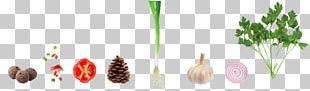 Vegetable Garlic Capsicum Annuum Onion PNG