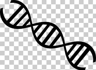 DNA Nucleic Acid Double Helix Genetics Molecular Biology PNG