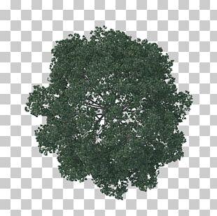 English Oak Tree Architecture Pine Landscape PNG