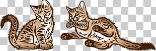 Kitten Tabby Cat Wildcat Whiskers PNG