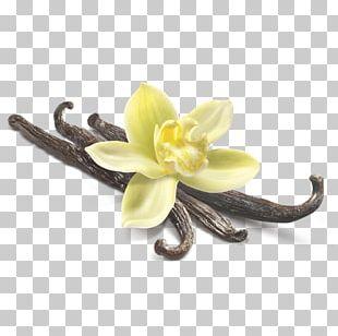 Vanilla Flower Closeup PNG
