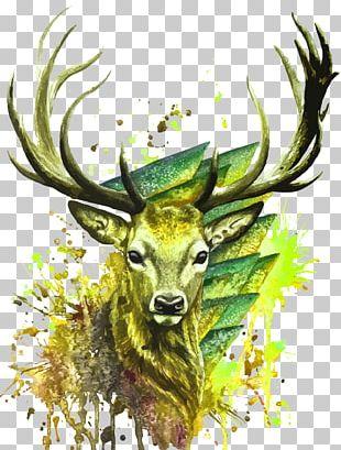 Deer Watercolor Painting Illustration PNG