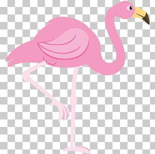 Flamingo Free PNG