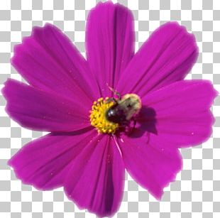 Cosmos Photography PNG