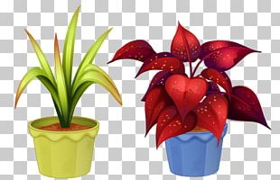 Ornamental Plant Flowerpot Houseplant Flowering Plant PNG
