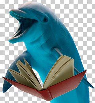 Dolphin Database Information Transparency And Translucency Material PNG