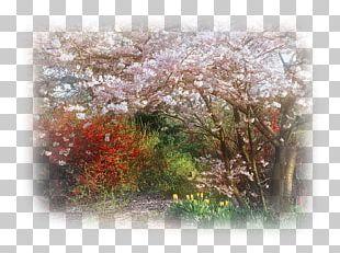Branch Cherry Blossom Tree PNG