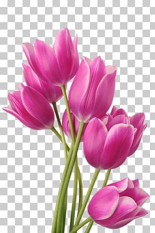 Tulip Flower Bouquet Fototapet Garden Roses PNG