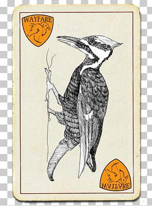 Beak Flightless Bird Cartoon PNG