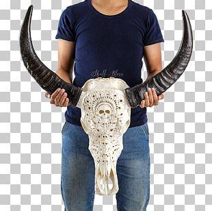 Human Skull Horn Human Skeleton PNG