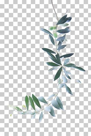 Watercolor Painting Olive Branch PNG
