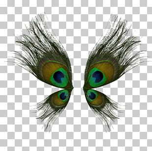 Bird Butterfly Peafowl Wing Feather PNG