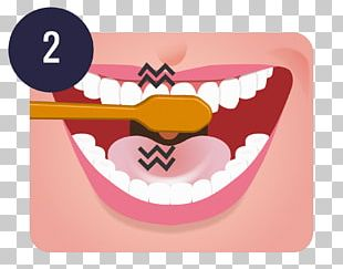 Tooth Brushing Teeth Cleaning Dentistry Oral Hygiene PNG