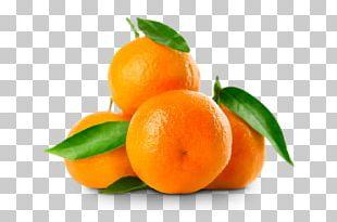 Mandarin Orange Clementine Fruit Citrus × Sinensis Rutaceae PNG