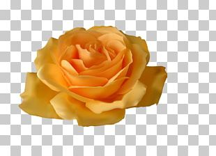 Rose Yellow Flower PNG