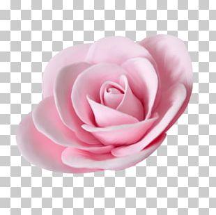 Garden Roses Flower Beach Rose PNG