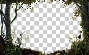 Nature Hd PNG