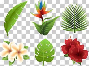 Tropics Euclidean Flower PNG